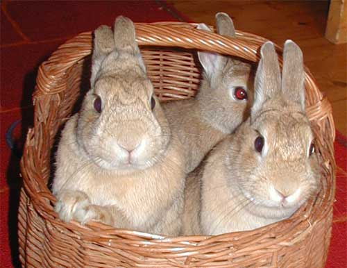 It's Not About Bunnies.... Basket%20bunnies