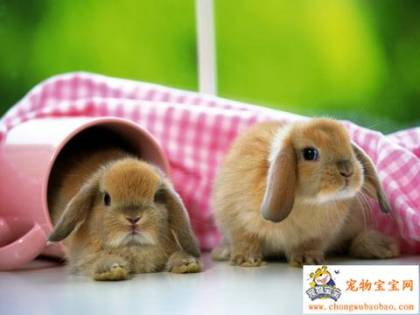 Cute animals!! :) Rodney%20and%20Lentil%20again