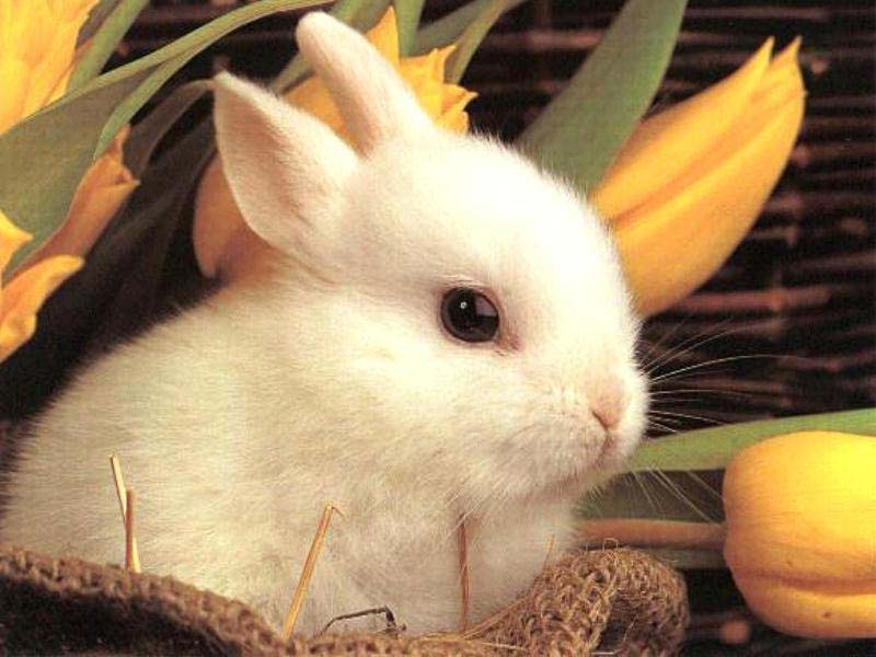 Cute Baby Bunny Rabbits